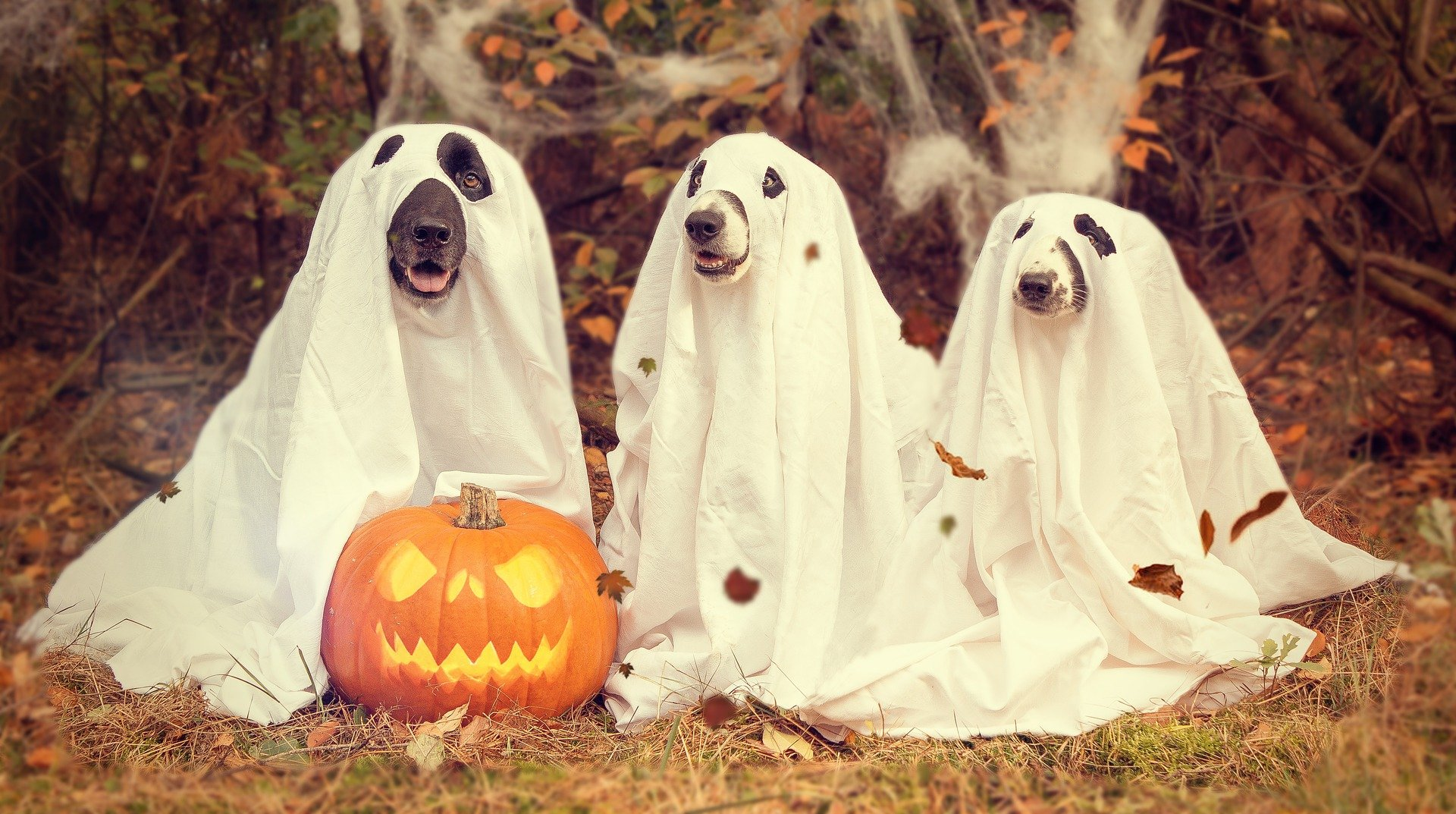 Positive Things About Halloween 2020 Saturday Halloween   Top 3 Pros and Cons   ProCon.org