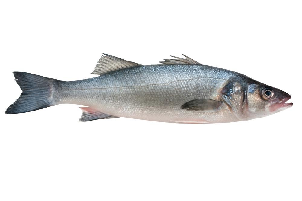 fish portion size