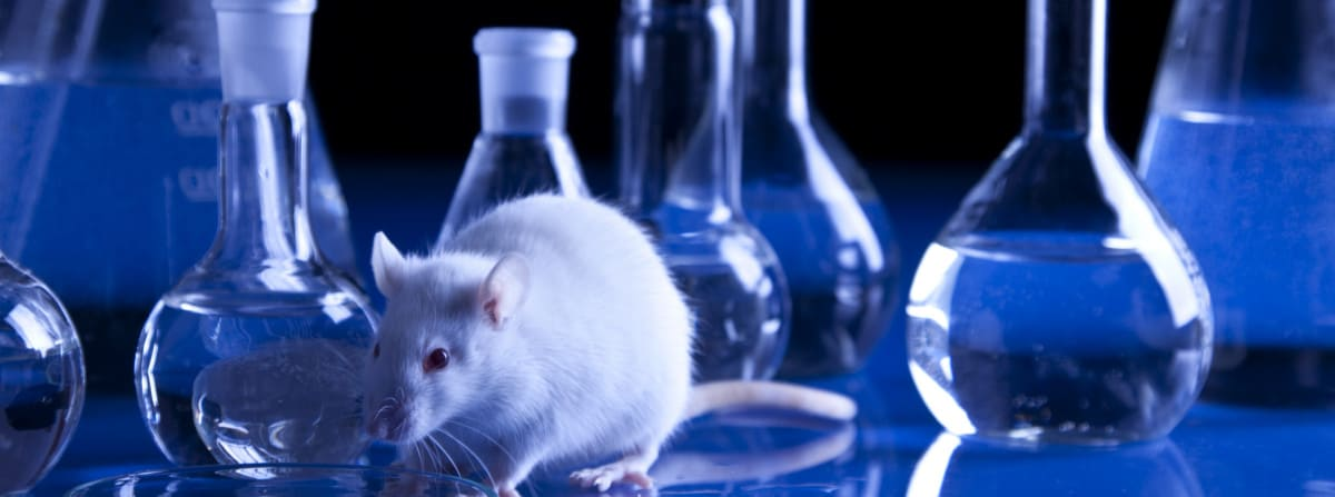 Mouse Model Yields Possible Treatment >> Animal Testing Pros Cons Procon Org